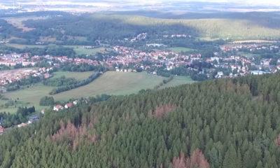 Borkenkäferwald